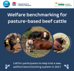 cattle benchmark