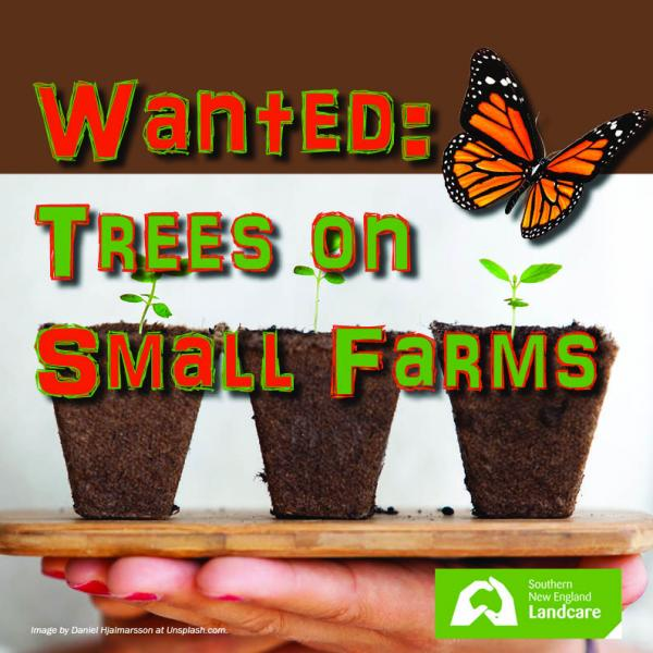 Planning for Horses & Trees on Small Farms