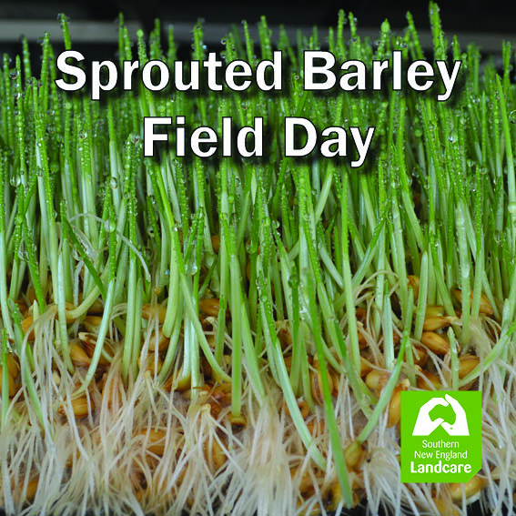 Sprouted Barley as Green Fodder