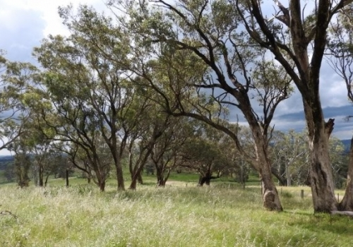 BCT offers annual payments to conserve biodiversity on farms