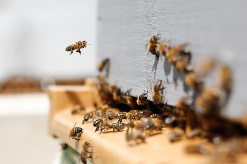 Friends of Barry Munday Reserve Working Bee & Meeting